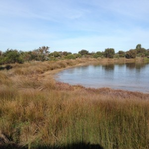 Intertidal basin after 10 years
