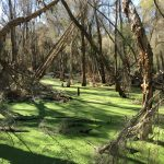 Honeywood Estate Wetland Rehabilitation Video